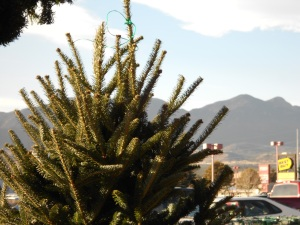 Love the way you can see the Christmas tree & the Colorado mountains.